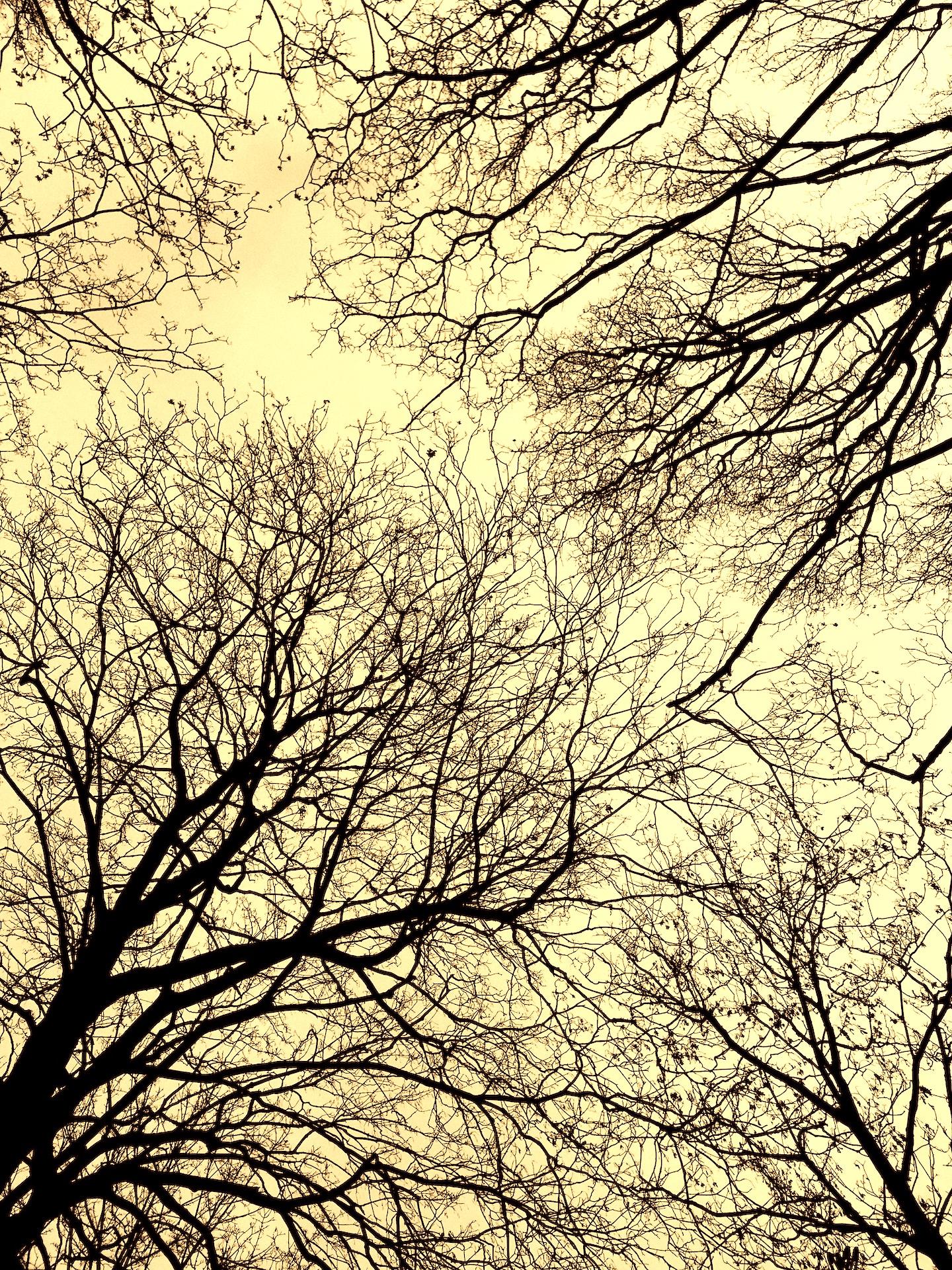 دلم میخواست این درختها بالای سرم باشند در بهشت زهرا. ولی نبودند. اینها درختهای گورستان مونمارتند؛ مونمارتِ پاریس.